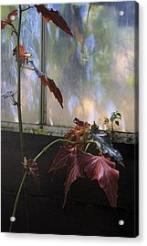 Acrylic Print featuring the photograph Tropical And Humid. by Viktor Savchenko