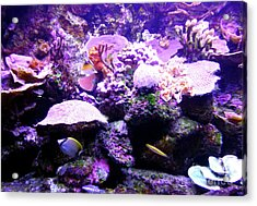 Acrylic Print featuring the photograph Tropical Aquarium by Francesca Mackenney