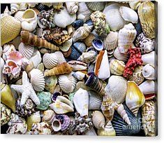Tropical Beach Seashell Treasures 1500a Acrylic Print