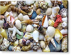 Tropical Beach Seashell Treasures 1529b Acrylic Print