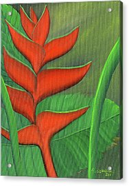 Tropical Beauty - Red And Green Heliconia Acrylic Print by Maria Williams