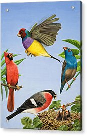 Tropical Birds Acrylic Print by RB Davis
