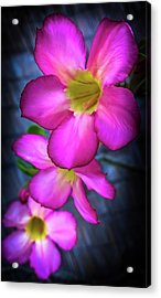 Tropical Bliss Acrylic Print by Karen Wiles