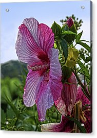 Acrylic Print featuring the photograph Tropical Bloom by Robert Pilkington