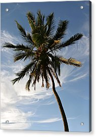 Tropical Coconut Palm Tree Maui Hawaii Acrylic Print by Pierre Leclerc Photography
