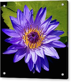 Acrylic Print featuring the photograph Tropical Day Blooming Water Lily In Lavender by Julie Palencia