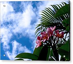 Tropical Days Acrylic Print by Edan Chapman