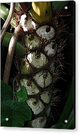 Acrylic Print featuring the photograph Tropical  Eyes by Lori Mellen-Pagliaro