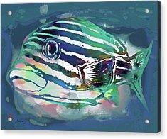 Tropical Fish - New Pop Art Poster Acrylic Print by Kim Wang
