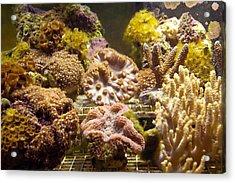 Tropical Fish Tank 10 Acrylic Print by Steve Ohlsen
