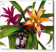 Bromeliads Indoor Flower Acrylic Print