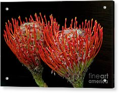 Tropical Flower Acrylic Print by Elvira Ladocki