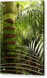 Tropical Forest Jungle Acrylic Print by Les Cunliffe