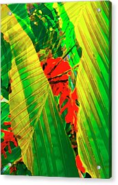 Tropical Fusion Acrylic Print by Stephen Anderson