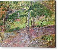 Tropical Landscape Acrylic Print