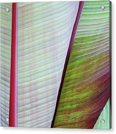 Tropical Leaves No 5  2009 Acrylic Print by Joseph Duba