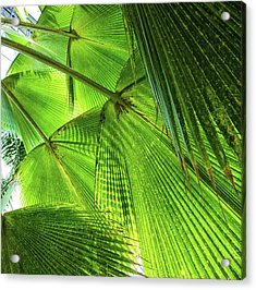 Tropical Acrylic Print by Martin Newman
