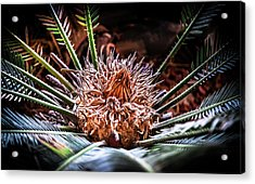 Acrylic Print featuring the photograph Tropical Moments by Karen Wiles