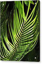 Acrylic Print featuring the photograph Tropical Palm by Carol Sweetwood