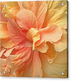 Tropical Peach Hibiscus Flower Acrylic Print