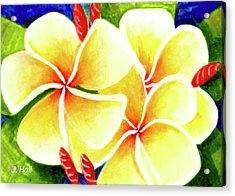 Tropical Plumeria Flowers #226 Acrylic Print by Donald k Hall