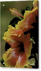 Acrylic Print featuring the photograph Tropical Punch by Lori Mellen-Pagliaro