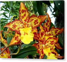 Tropical Red And Yellow Orchids Acrylic Print