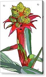 Tropical Reds Acrylic Print