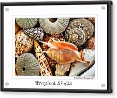 Tropical Shells... Greeting Card Acrylic Print by Kaye Menner