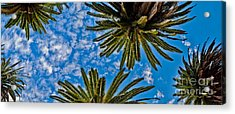 Tropical Skies Acrylic Print