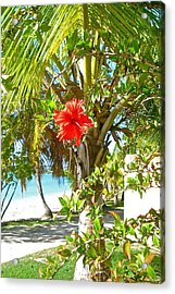 Tropical Spring Flower Acrylic Print