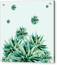 Tropical Stars  Acrylic Print