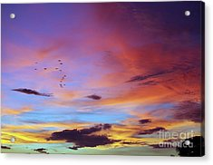 Tropical North Queensland Sunset Splendor  Acrylic Print by Kerryn Madsen-Pietsch