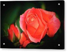 Tropicana Rose Acrylic Print by Albert Seger