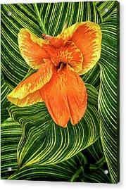 Tropicanna Beauty Acrylic Print