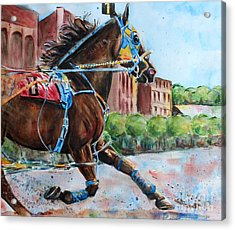 trotter standardbred Horse at the Little Brown Jug Acrylic Print