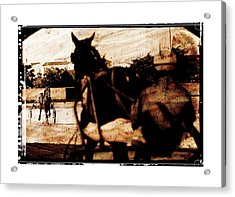 Acrylic Print featuring the photograph trotting 1 - Harness racing in a vintage post processing by Pedro Cardona