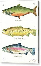 Trout Species Acrylic Print by Juan Bosco