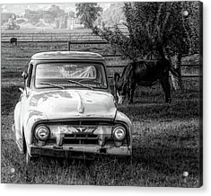 Truck And Cows Living Together Bw Acrylic Print