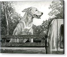 Truck Queen Study Acrylic Print by Craig Gallaway