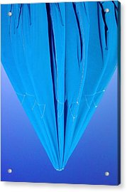 True Blue Acrylic Print
