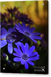 True Blue In The Late Afternoon Sunlight 2 Acrylic Print