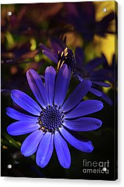 True Blue In The Late Afternoon Sunlight 3 Acrylic Print