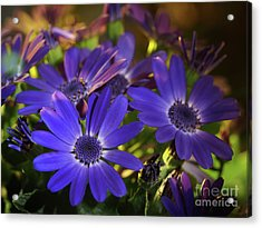 True Blue In The Late Afternoon Sunlight Acrylic Print