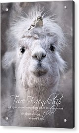 Acrylic Print featuring the photograph True Friendship by Robin-Lee Vieira