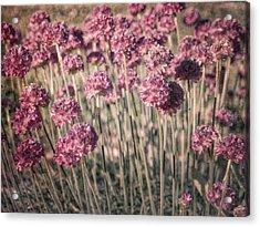 Truffula Tree Acrylic Print