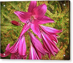 Acrylic Print featuring the photograph Trumpet Flowers by Lewis Mann
