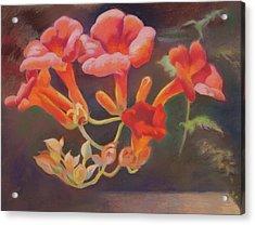 Trumpet Flowers Acrylic Print
