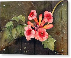 Acrylic Print featuring the painting Trumpet Vine II by Katherine Miller