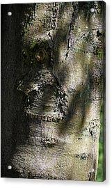 Trunk Knot Acrylic Print